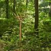 Coat Rack Y Oak